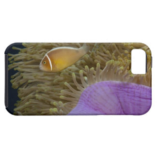Underwater LIfe; FISH: Clownfish (Pink iPhone 5 Cover