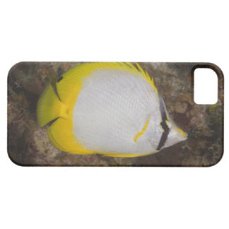 Underwater Life, FISH: Colorful Spotfin iPhone 5 Cover