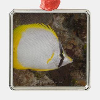 Underwater Life, FISH: Colorful Spotfin Silver-Colored Square Decoration