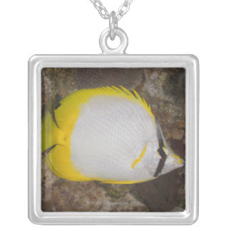 Underwater Life, FISH: Colorful Spotfin Silver Plated Necklace