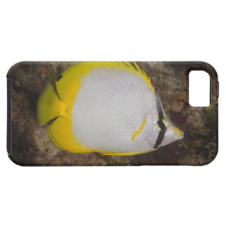 Underwater Life, FISH: Colorful Spotfin Tough iPhone 5 Case