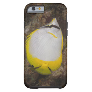 Underwater Life, FISH: Colorful Spotfin Tough iPhone 6 Case