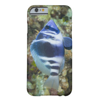 Underwater Life, FISH:  Indigo Hamlet Barely There iPhone 6 Case