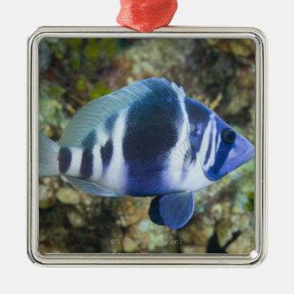 Underwater Life, FISH:  Indigo Hamlet Christmas Ornament
