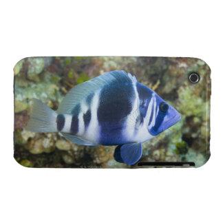 Underwater Life, FISH:  Indigo Hamlet iPhone 3 Case-Mate Cases