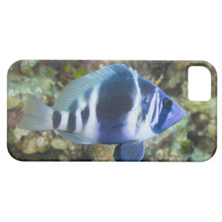 Underwater Life, FISH:  Indigo Hamlet iPhone 5 Cases