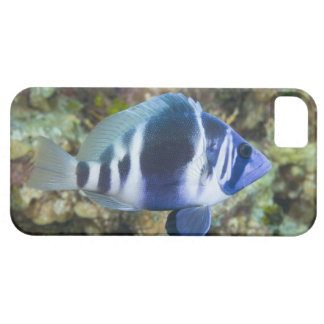Underwater Life, FISH:  Indigo Hamlet iPhone 5 Covers