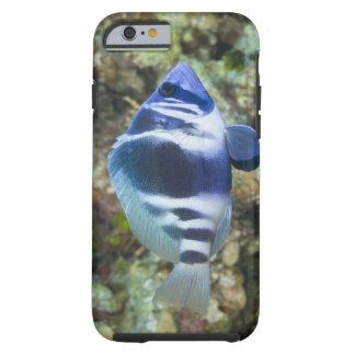 Underwater Life, FISH:  Indigo Hamlet Tough iPhone 6 Case