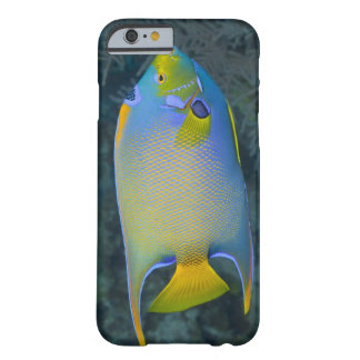 Underwater Life; FISH:  Queen Angelfish Barely There iPhone 6 Case