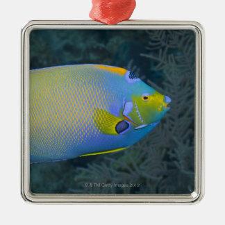 Underwater Life; FISH:  Queen Angelfish Christmas Ornament