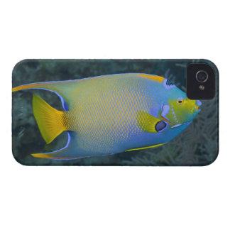 Underwater Life; FISH:  Queen Angelfish iPhone 4 Case-Mate Cases