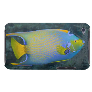 Underwater Life; FISH:  Queen Angelfish iPod Touch Covers