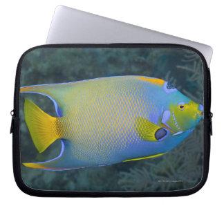 Underwater Life; FISH:  Queen Angelfish Laptop Sleeve