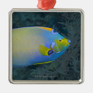 Underwater Life; FISH:  Queen Angelfish Silver-Colored Square Decoration