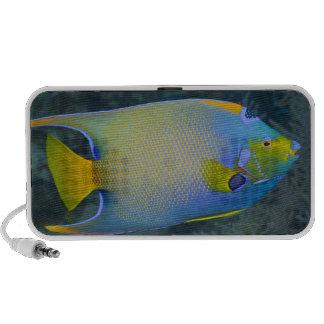 Underwater Life; FISH:  Queen Angelfish Speaker