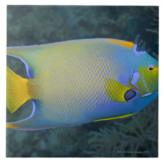Underwater Life; FISH:  Queen Angelfish Tile