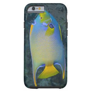 Underwater Life; FISH:  Queen Angelfish Tough iPhone 6 Case