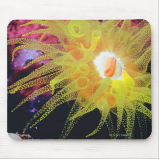 Underwater organism mouse pad