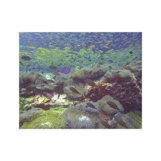 Underwater Paradise Similan Islands Thailand Canvas Print