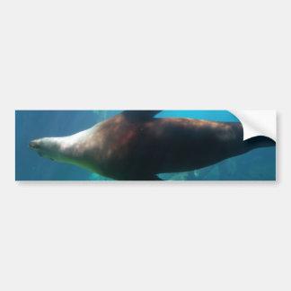 Underwater Sea Lion Bumper Stickers