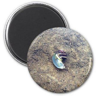 Underwater Snail Magnet