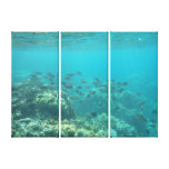 Underwater tropical fish scene canvas stretched canvas print