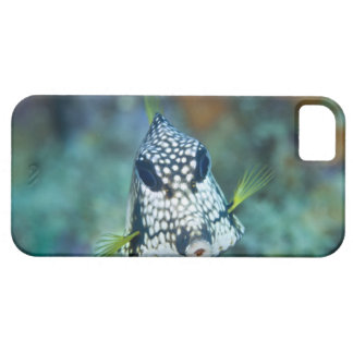 Underwater view of Smooth Trunkfish (Lactophrys Barely There iPhone 5 Case