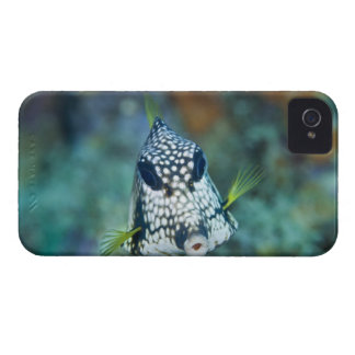 Underwater view of Smooth Trunkfish (Lactophrys iPhone 4 Case-Mate Case