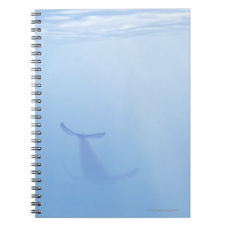 Underwater view of whale notebook