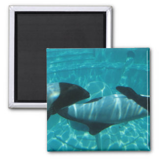 Underwater Whales Square Magnet Magnets