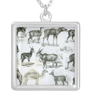 Ungalata or Hoofed Animals Silver Plated Necklace