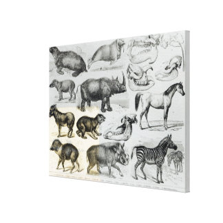 Ungulata or Hoofed Animals Gallery Wrap Canvas