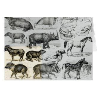 Ungulata or Hoofed Animals Card