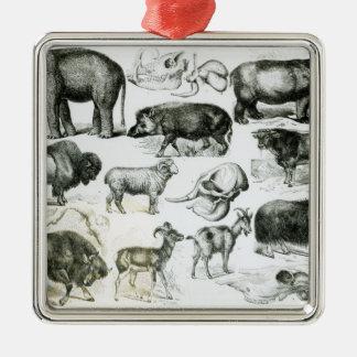 Ungulata or Hoofed Animals Silver-Colored Square Decoration