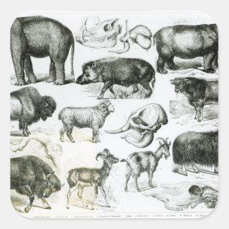 Ungulata or Hoofed Animals Square Sticker