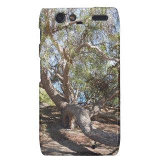 Unidentified Tree on the California Coast Motorola Droid RAZR Cover