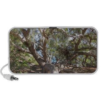 Unidentified Tree on the California Coast Travelling Speaker