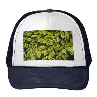Unique Beech leaf Cap