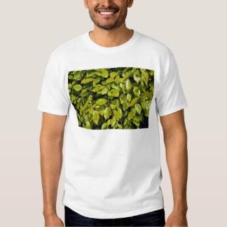 Unique Beech leaf Shirt