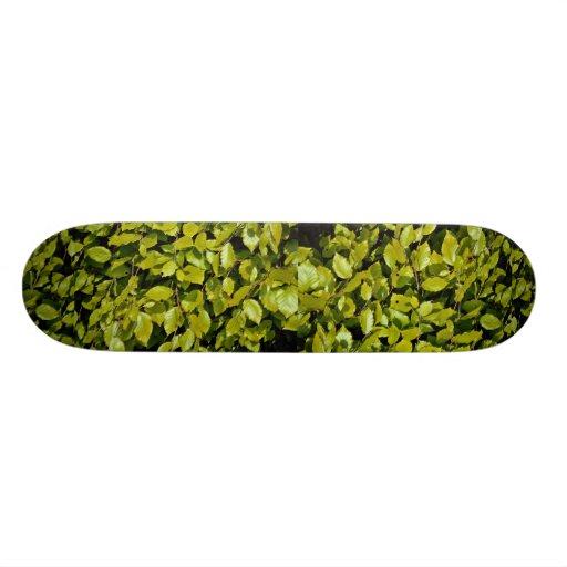 Unique Beech leaf Skate Board Deck