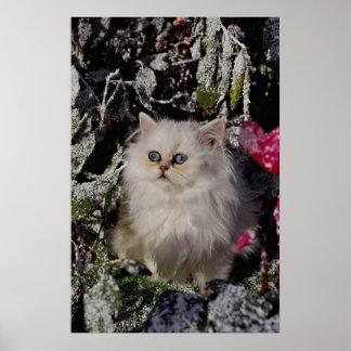 Unique Bicolored kitten Print