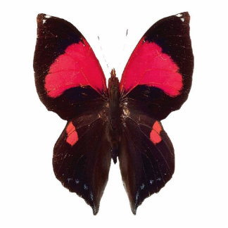 Unique black and red butterfly keychain photo cutouts