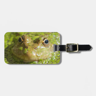 Unique Frog photograph luggage tag