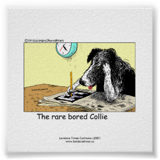 Unique Funny Border Collie Poster