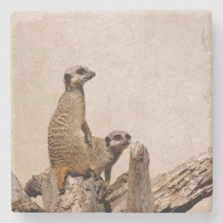 Unique Meerkat Coaster