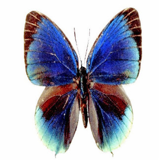 Unique Multi Colored Butterfly Photo Cut Out