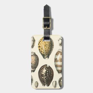 Uniquely Shaped Seashells Bag Tag