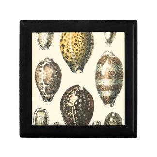 Uniquely Shaped Seashells Gift Box