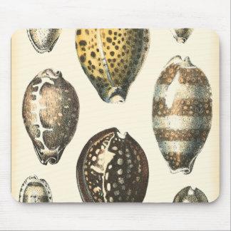 Uniquely Shaped Seashells Mouse Mat