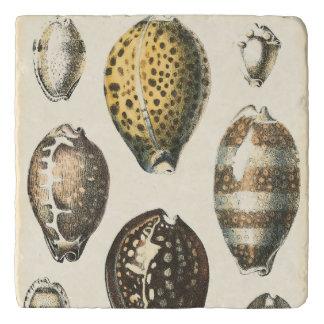 Uniquely Shaped Seashells Trivet